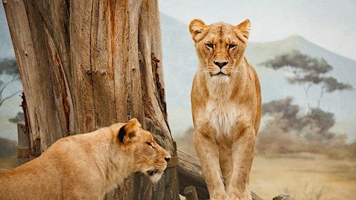 Safari-Lodges, Glamping-Hotspots, Highlights